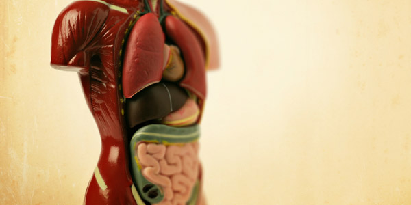donera organ